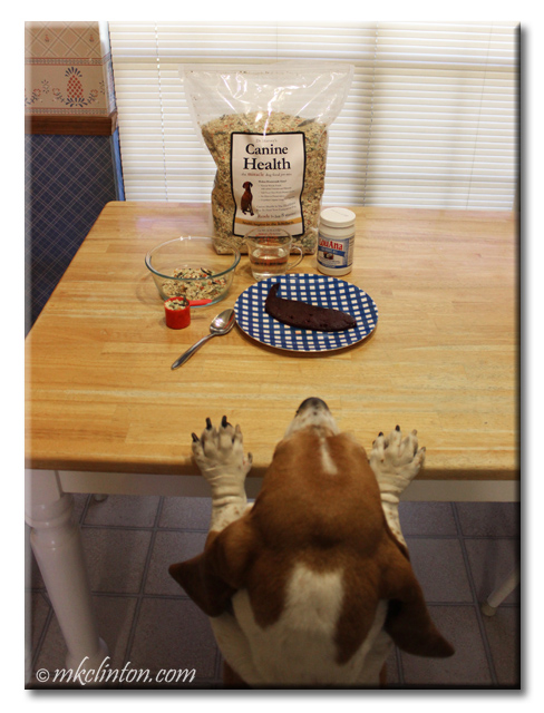 Basset Hound with paws on table looking at Dr. Harvey's Canine Health do food pre-mix and liver