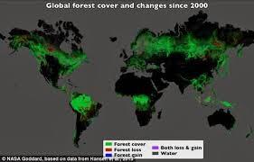 Kerusakan Hutan di Dunia