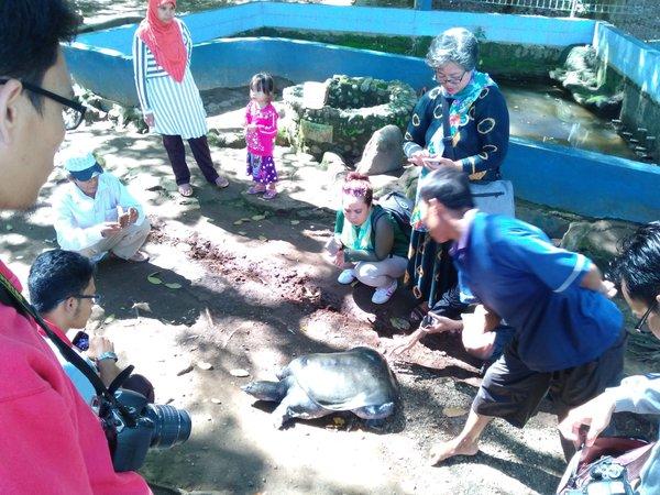 Kura-kura Belawa Cirebon