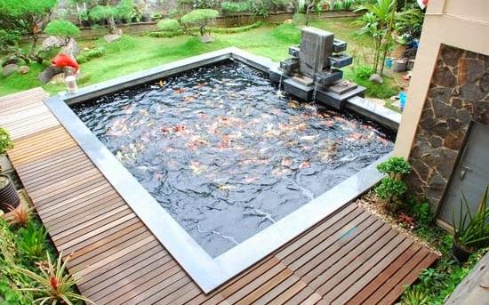 model desain kolam ikan hias depan rumah - Budidaya ikan hias