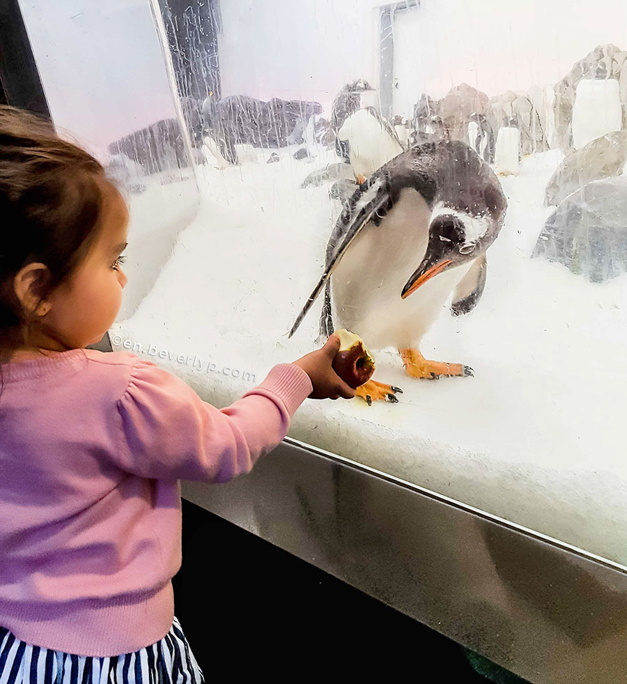 Pinguins-at-Melbourne-aquarium