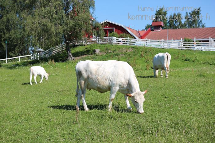 fallkulla kotieläintila malmi helsinki lehmä nauta