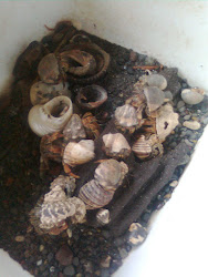 Hermit Crab Collection