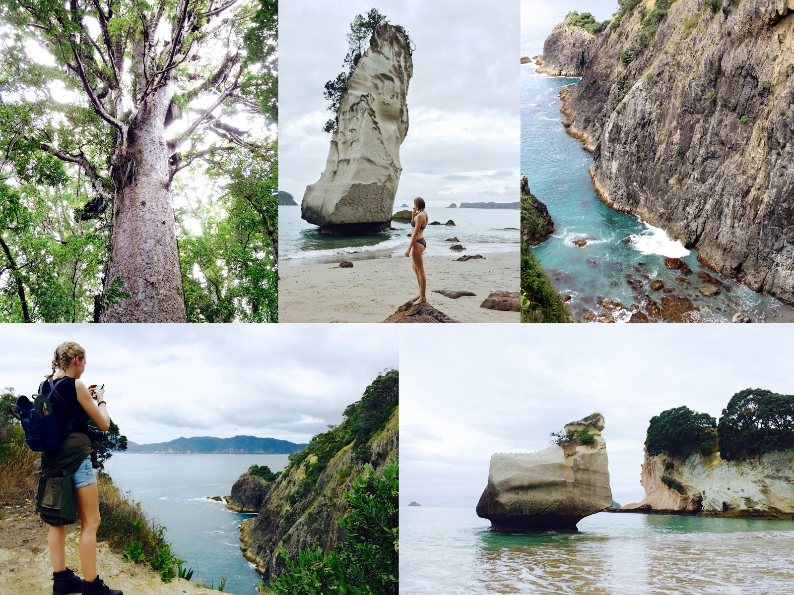 New Zealand's best hikes | Waipoua Forest, Urupukapuka Island & Cathedral Cove Walk