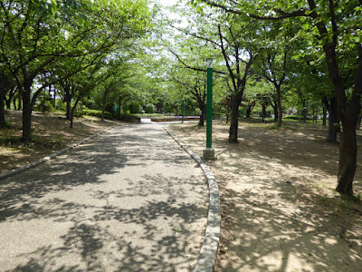 八幡屋公園 木漏れ日の遊歩道