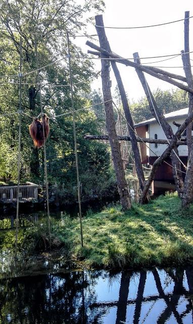 Zogenaamde actiefoto van een aap in de Apenheul, lui hangend in een touwnet
