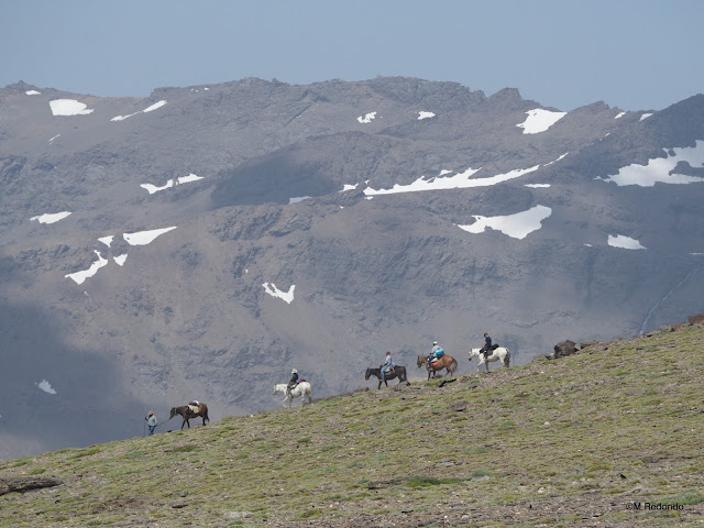 horses on the mulhacen