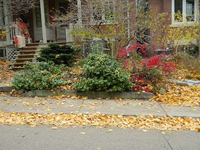 Riverdale Toronto Fall Cleanup Front Garden Before by Paul Jung Gardening Services--a Toronto Gardening Services Company