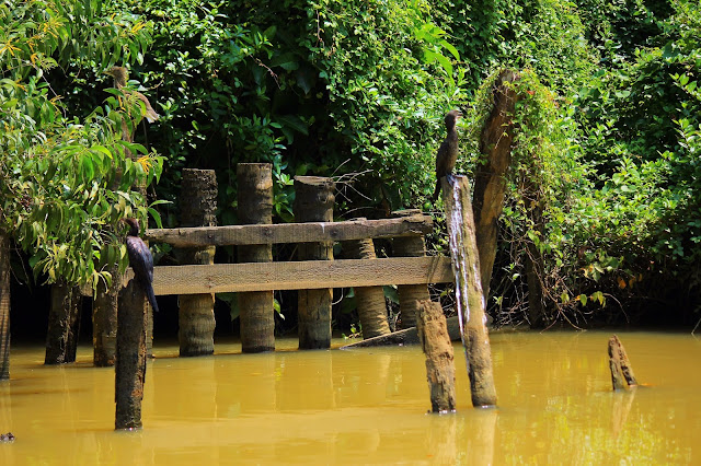 Poovar, neeyar, birds, backwater, Kovalam, Kerala