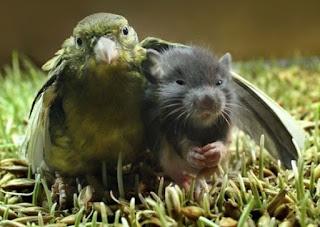 L'amicizia è un sentimento nobile che nasce dal cuore