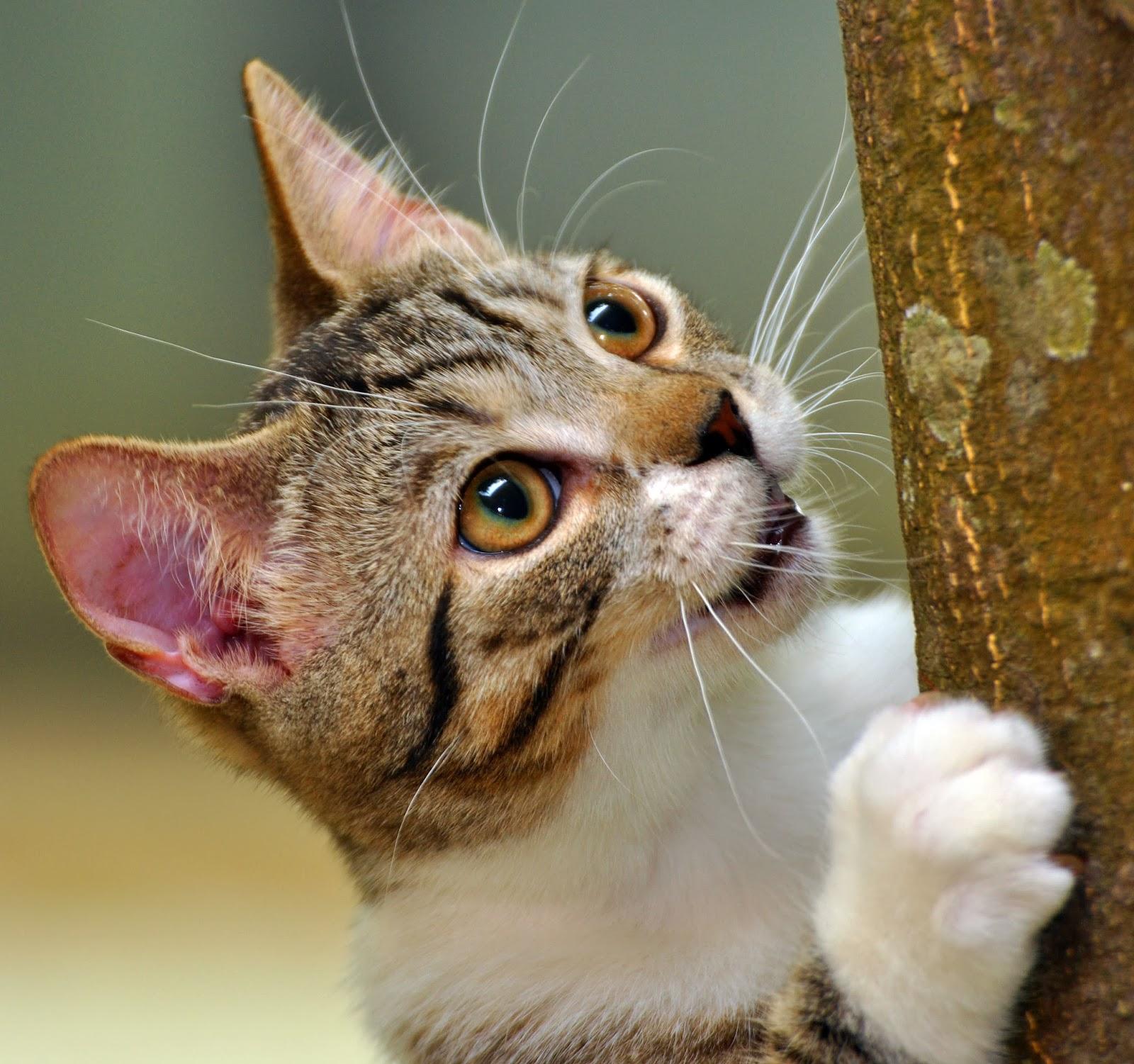 Memotret kucing diperlukan kesabaran yang tinggi dan memakan waktu yang  banyak untuk mendapatkan hasil yang baik. 8165423d45