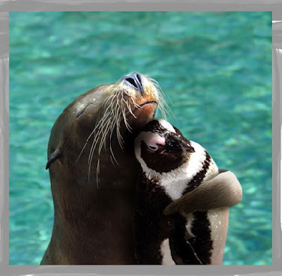แมวน้ำและเพนกวินกอดกัน ดูน่ารัก