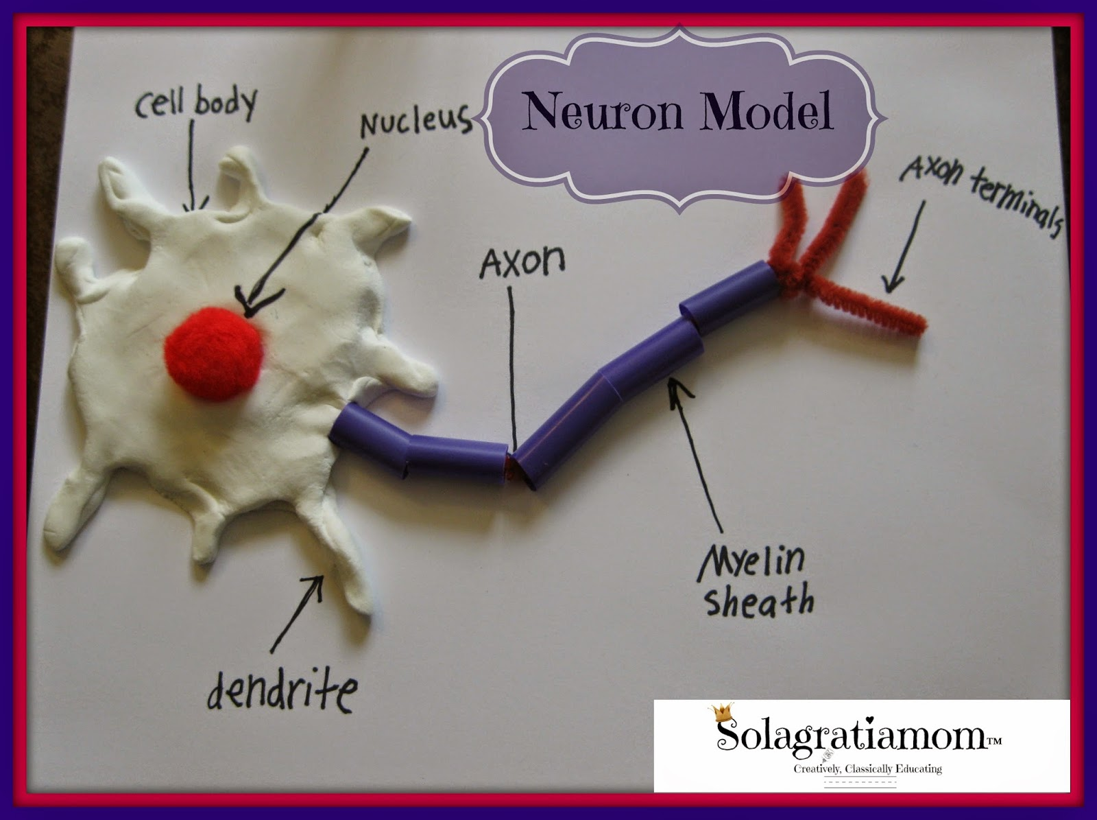 How To Make A Neuron Model Out Of Food