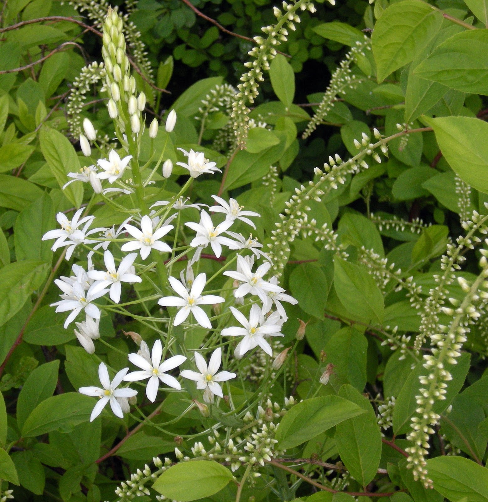 The Mathematical Tourist Star Flower