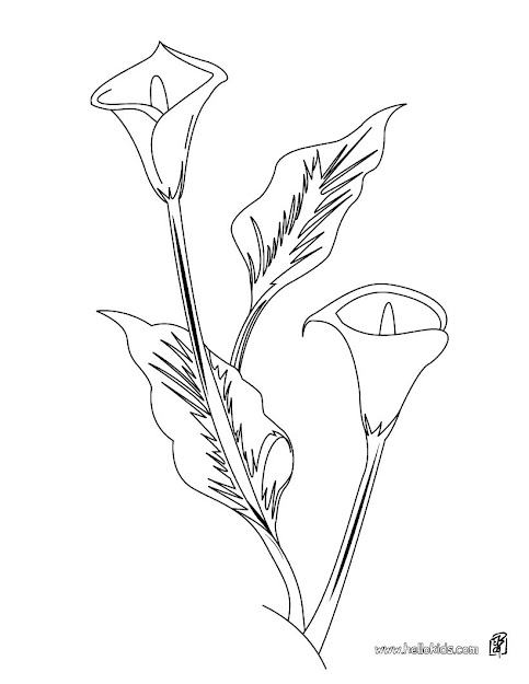Begonia Arum Lily Coloring Page  Coloring Page  Nature Coloring Pages  Flower  Coloring Pages