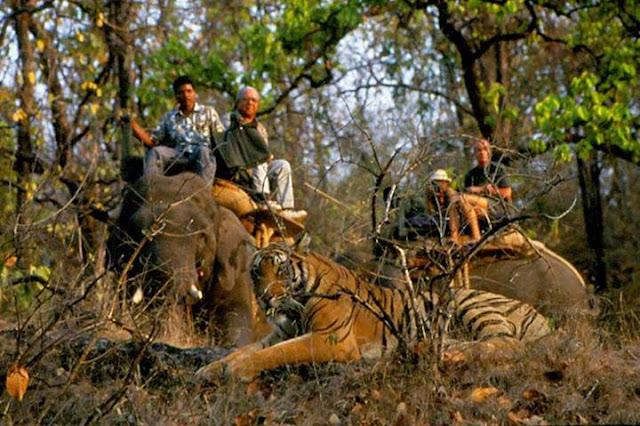 Bandhavgarh Jungle Safari, Madhya Pradesh