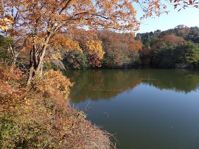 交野いきものふれあいの里・ふれあいセンター 白旗池の紅葉