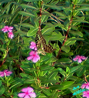 Flower and Butterfly. Kehijauan Rerumputan dan Dedaunan - Greeny Grasses