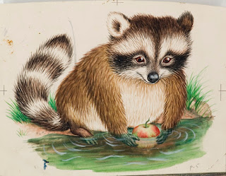 raccoon drawing from Baby Animals book