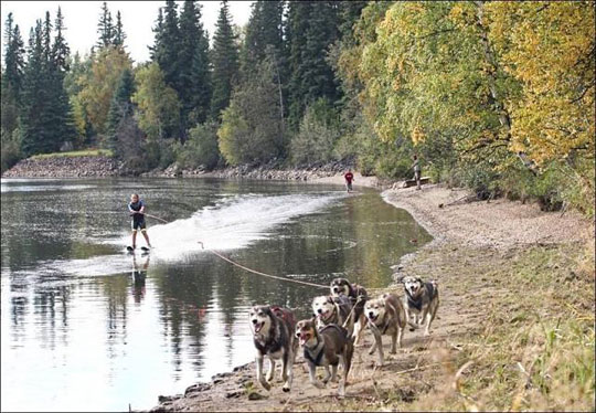 waterskiing by dogs
