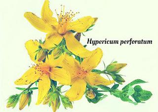 Aquí encontraras productos para el hogar, decoración y ropa con la Flor del hiperico
