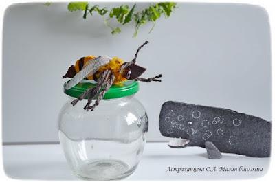 КОАПП_почему кусают насекомые_магия биологии, кашалот, пчела