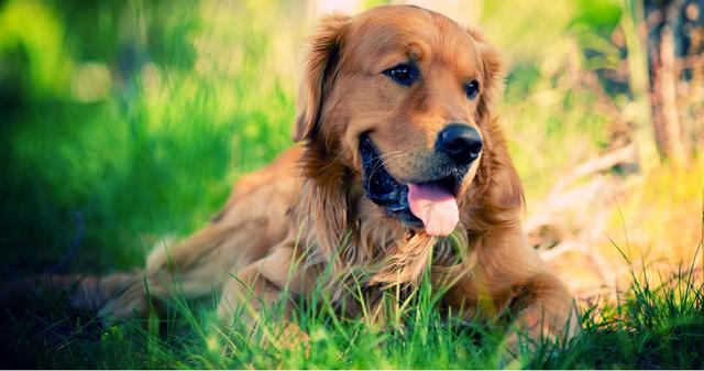 Πώς να προστατέψετε τον σκύλο σας απ΄τις ασθένειες «Lyme» και «Giardia»