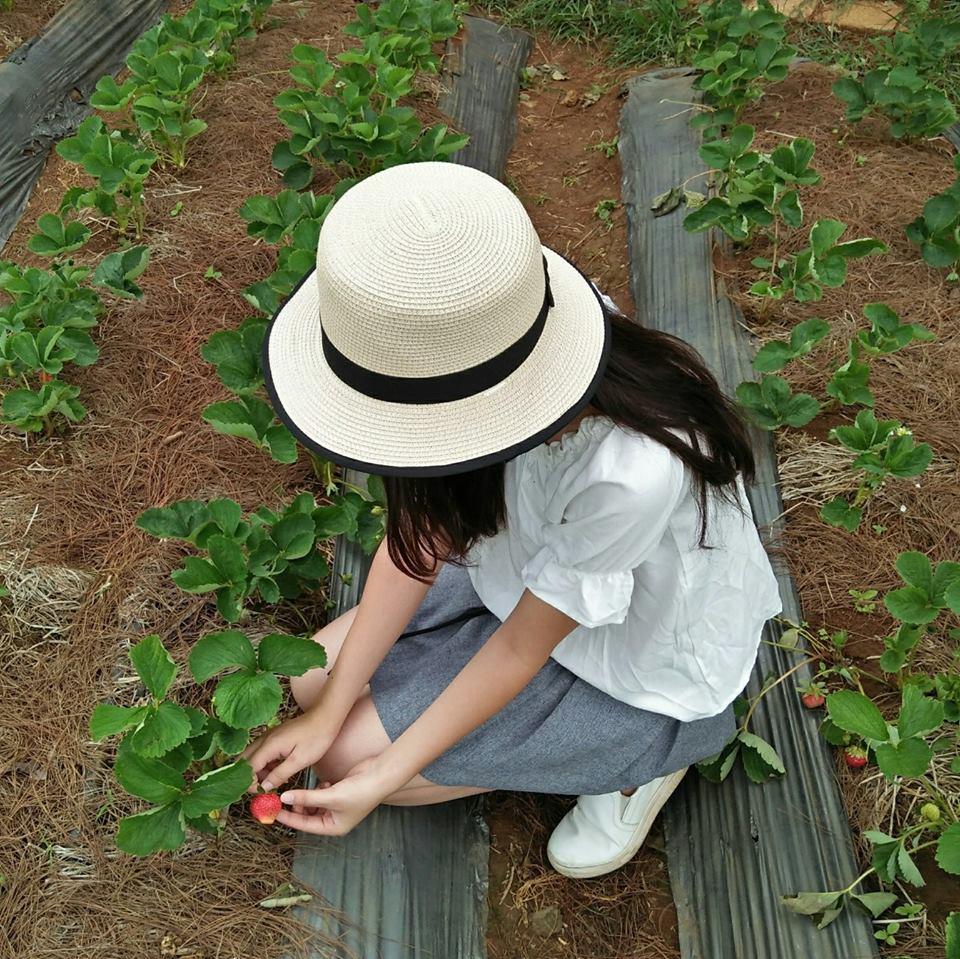 Trong vườn dâu tây Mộc Châu