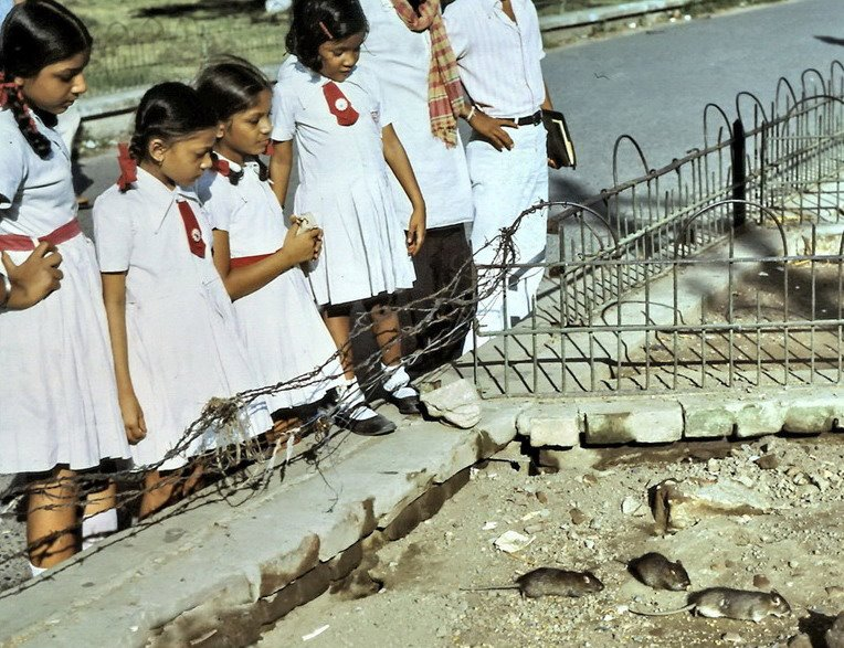 School Girls Feeding the Rats at Curzon Park