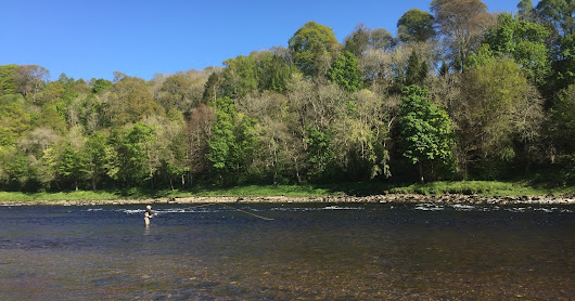 Salmon Fishing Scotland Prospects for Tay, Perthshire w/c 8th May 2017.