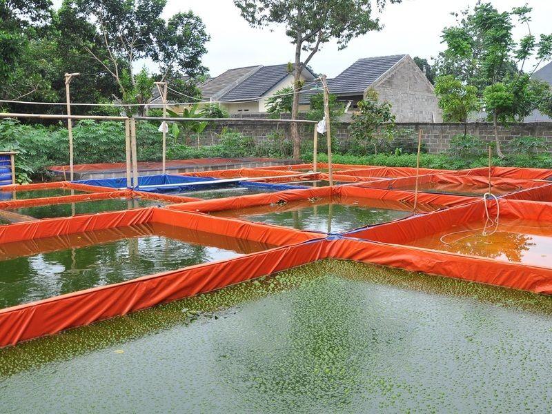 budidaya ikan air tawar di lahan sempit