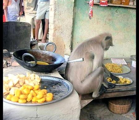 Monkey Made Sweets In India Funny
