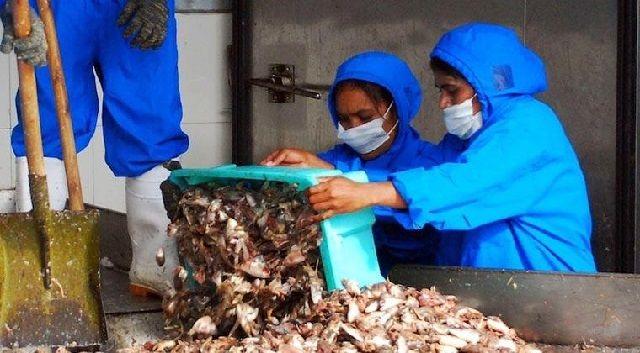 Bahan Baku Pembuat Pakan Ikan