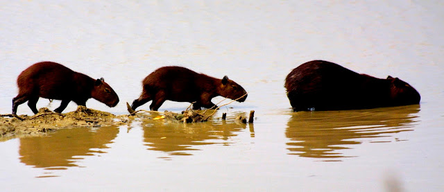 """Observando los llanos deforestados que rodean la ciudad de Jerez, extensos campos desertizados y envenenados en los que ya no permitan ni que crezca la hierba, es cuando comprendo que el campo de concentración para animales que tengo delante fue una distracción que sirvió para entretener a la gente mientras se destruían los verdaderos bosques y se extinguían a los animales en nombre del """"progreso"""" y del """"desarrollo"""". Durante milenios los seres humanos convivieron con los animales y la naturaleza fue sagrada para todas las religiones. Trescientos años de Revolución Científica han bastado para colocar a nuestro planeta al borde de su destrucción."""