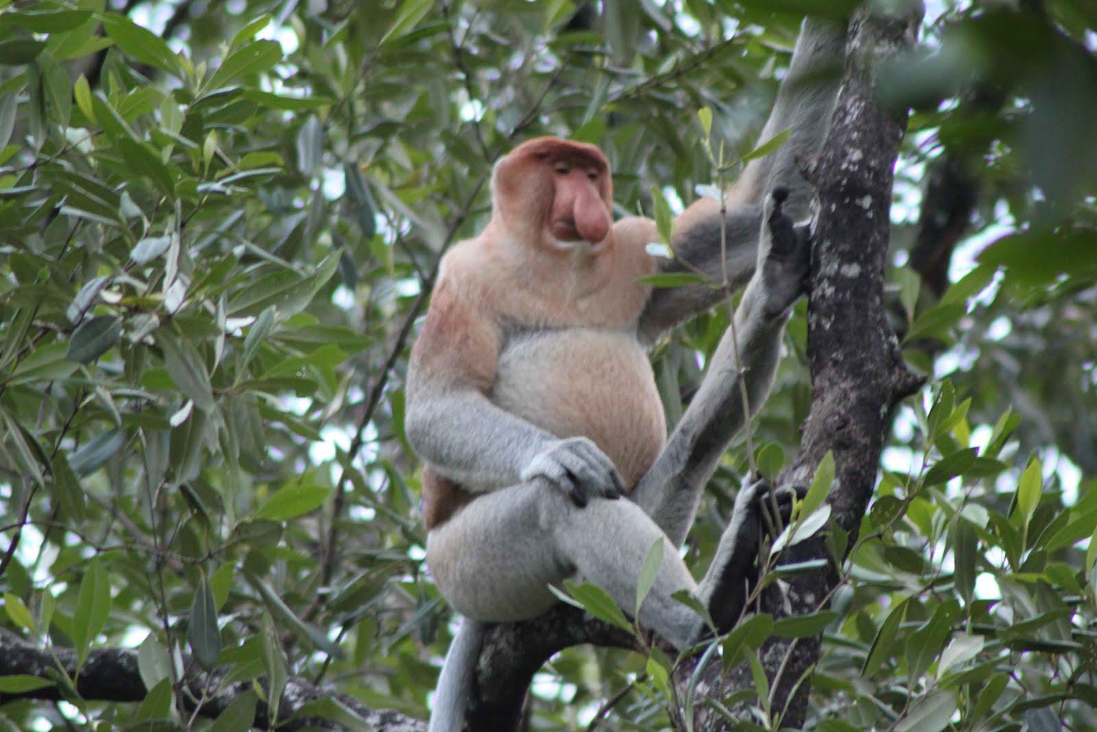 realita koplo rock & roll: Hutan Mangrove Di TARAKAN