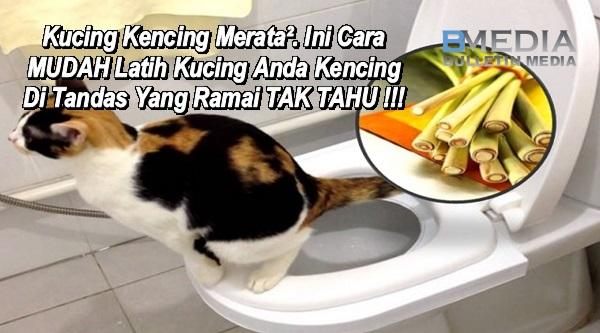 Kucing Kencing Merata². Ini Cara MUDAH Latih Kucing Anda Kencing Di Tandas Yang Ramai TAK TAHU !!!