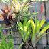 Make a Vertical Garden from Cheap Suet Basket Birdfeeders