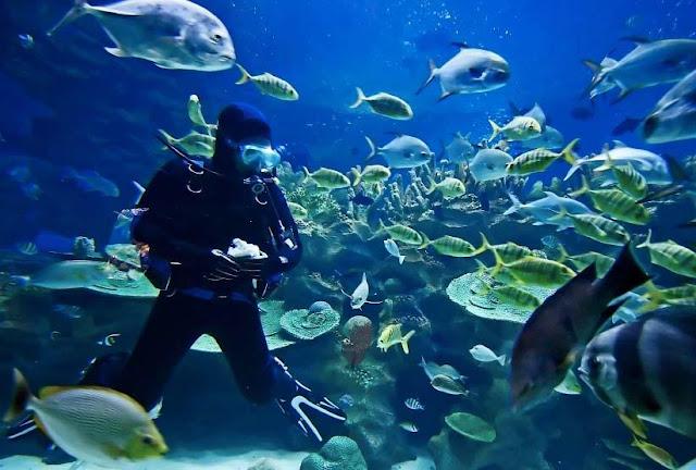 scuba-diving-jpg.