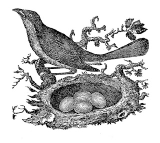 bird eggs nest download antique clip art digital