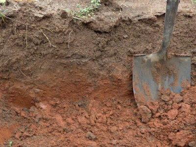 5 acres a dream for South carolina soil