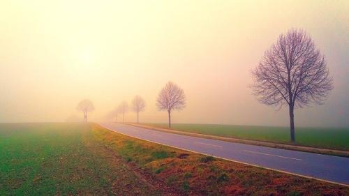 Amanhecer numa paisagem de estrada com árvores e névoa... #PraCegoVer