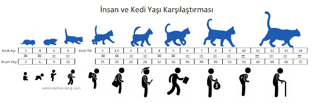 Kedi-yasi-nasil-hesaplanir