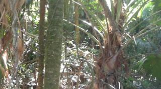 Vegetação Área de Preservação e Crime Ambiental para o STJ.
