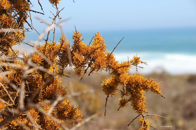 Travel South Africa. Vast and unspoilt coast line - Trip to Namaqualand. Plant Life