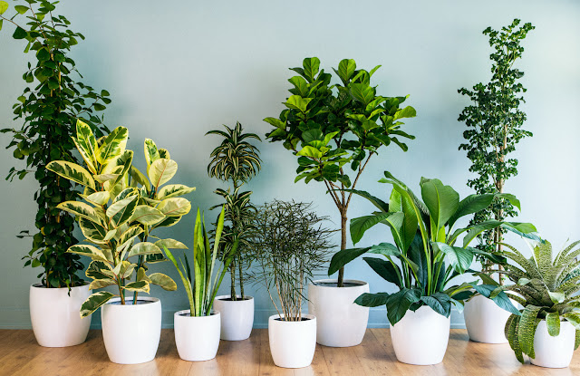 Start Growing Your Plants Indoor