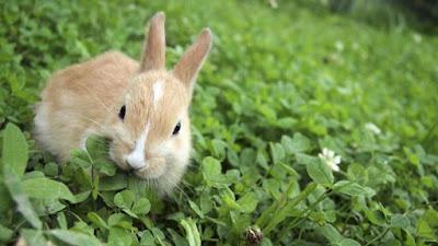making healthy rabbit treats at home