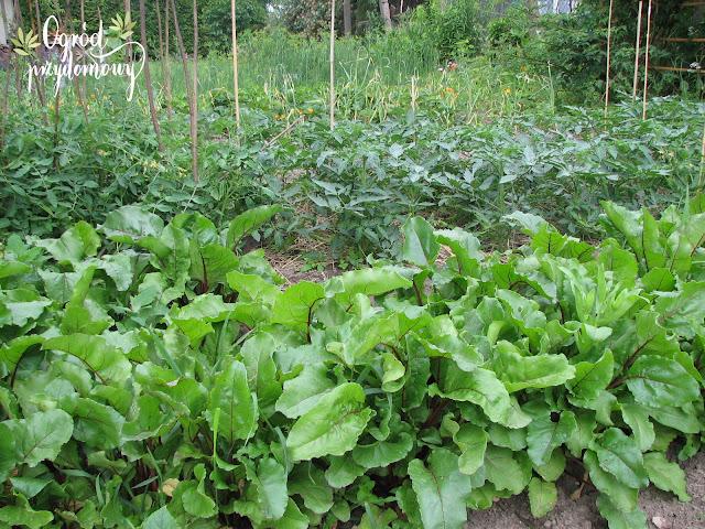 ogród przydomowy, opłacalne warzywa, co opłaca się uprawiać