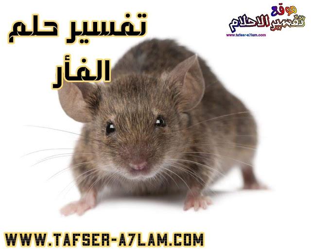 معنى رؤية الفأر في الحلم تفسير حلم الفأر الجري وراء الفئران أكل لحم الفأر القط والفار الفأر الابيض الفأر الاسود فئران كثيرة تفسير الاحلام لابن سيرين
