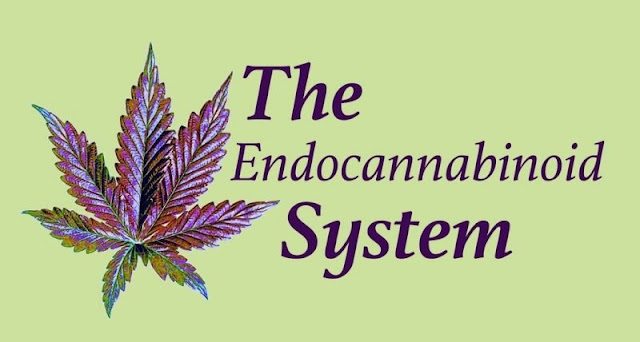 8 Amazing Facts About the Endocannabinoid System – and Why We Should Tell the World About It  8-Amazing-Facts-About-Endocannabinoid-System-Why-We-Should-Tell-World-About-It-800x428