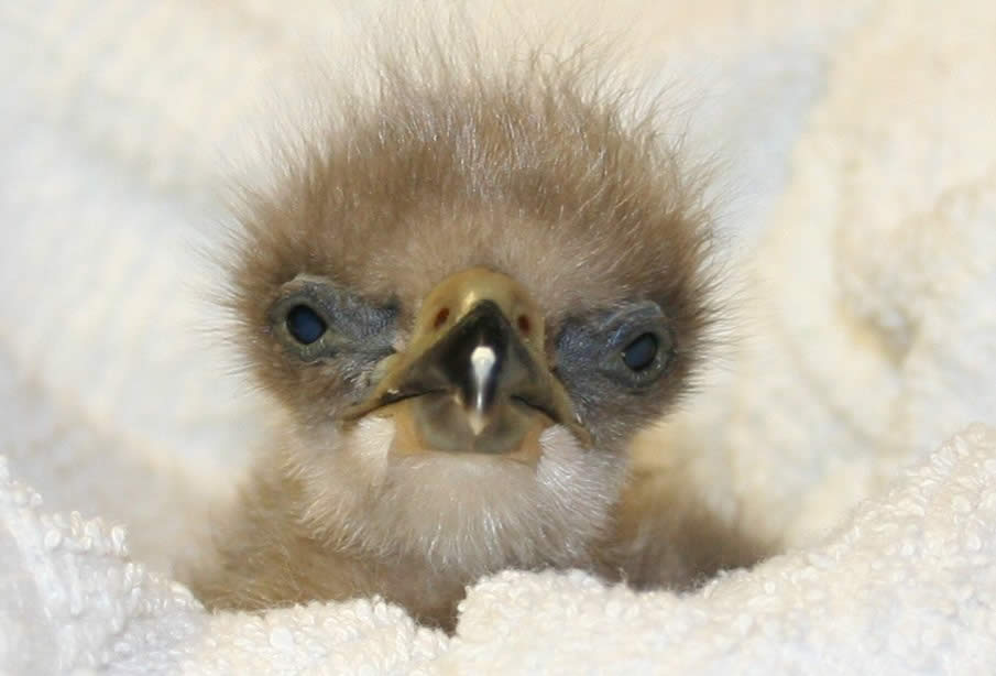 best photos 2 share: 7 Adorable Newly Hatched Birds to ...